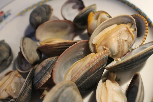 Steamed clams palourdes